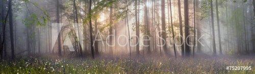 Magic Carpathian forest at dawn