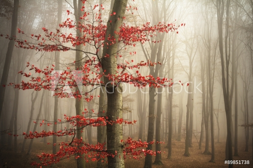 Red tree in misty forest