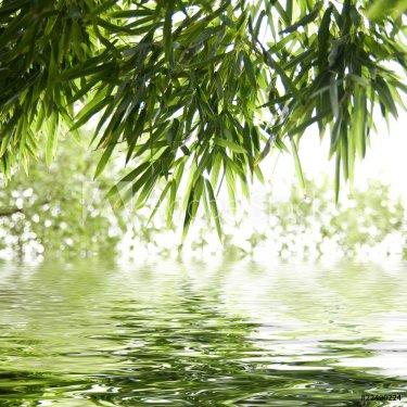 reflets de feuilles de bambous