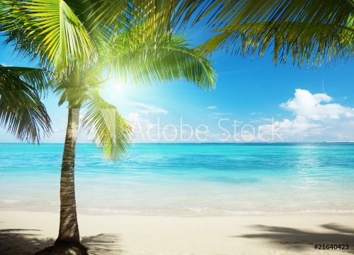 Caribbean sea and coconut pulms